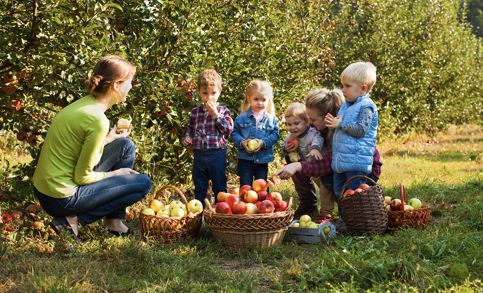 The Best Apple Picking On Long Island